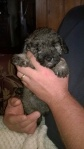 Jess 5 weeks tiny xx