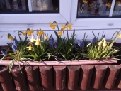 looking very spring like in my kitchen windowbox