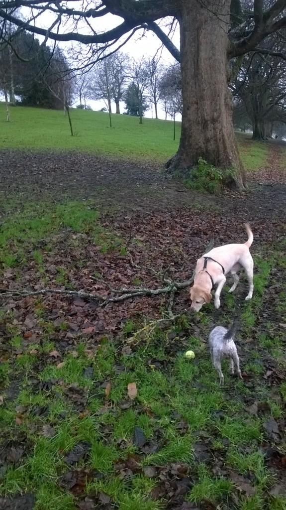 the dogs enjoyed it...