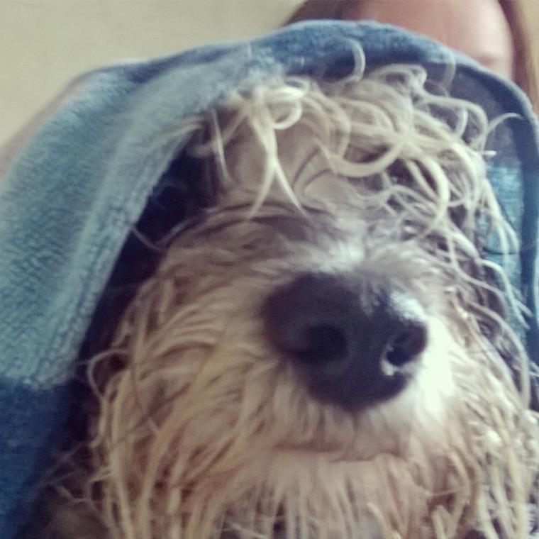 wet Jess