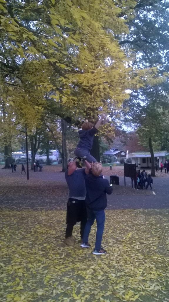 getting balls stuck up trees...