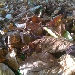 crispy leaves