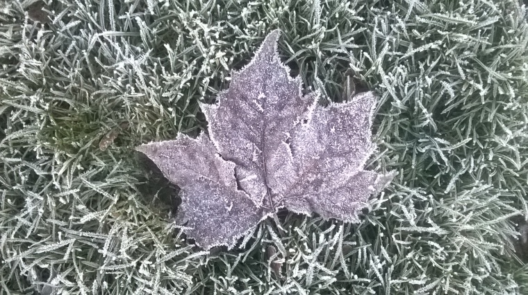 Jack Frost has painted this leaf...