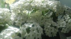pretty whites