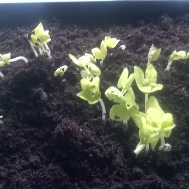 seedlings