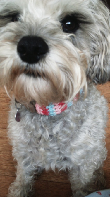 free dog collar crochet pattern...simple free pattern which you can croche in under an hour