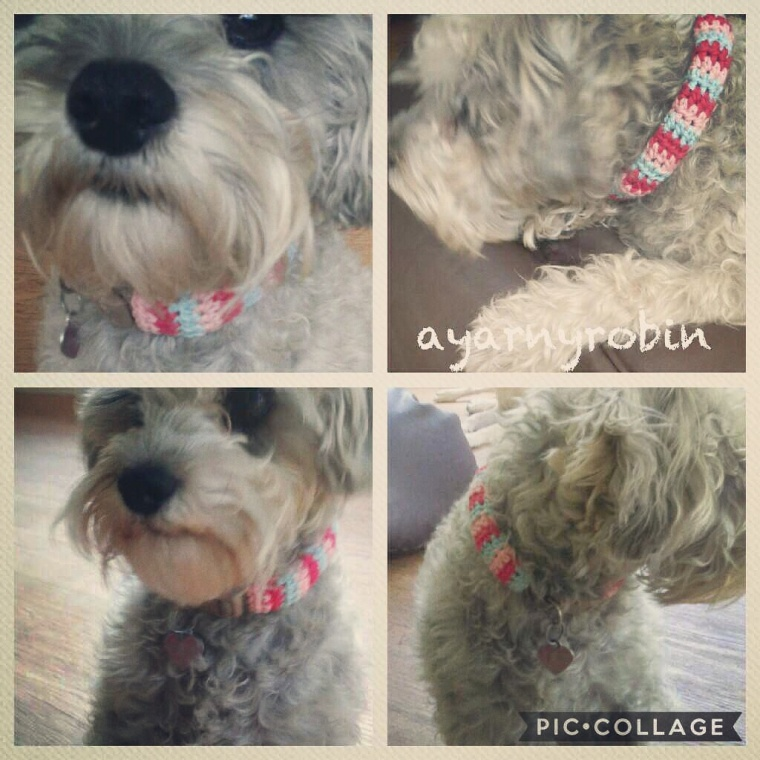 Free Dog Collar Crochet Pattern