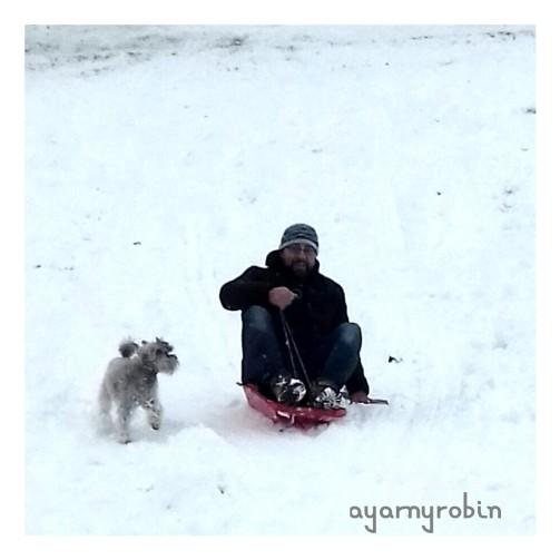 Jess enjoyed chasing the sledge...