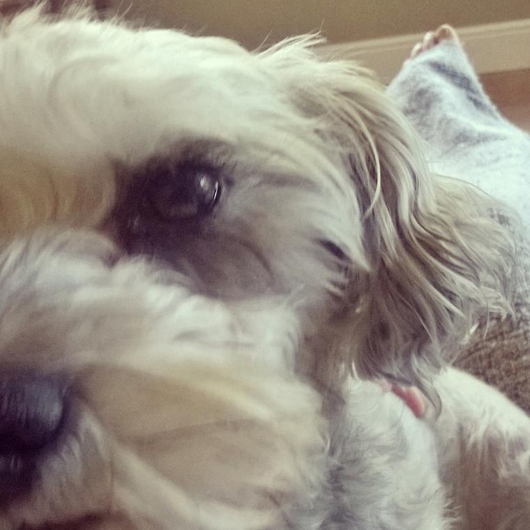 scnoodle dog
