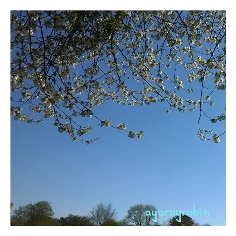 april sunshine