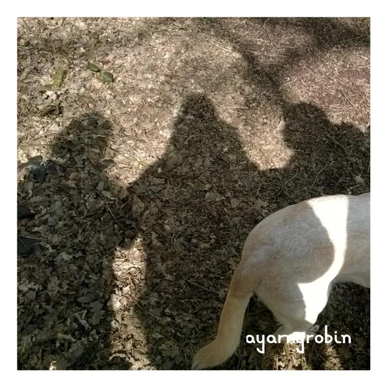 sunny shadows